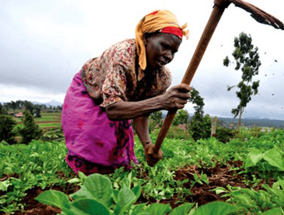 Donate african woman farmer stock image
